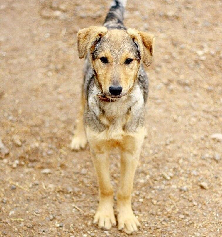 Собака Лиска ищет дом